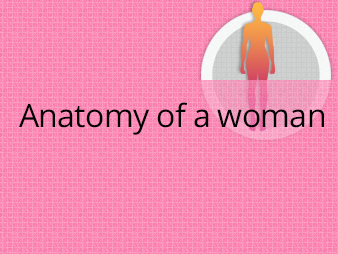 womans anatomy